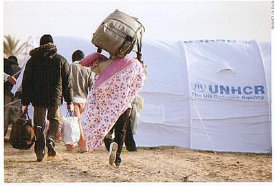 UNHCRポストカード(絵葉書)
